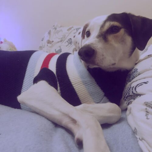 Sweter dla dużego psa w stylowe paski photo review