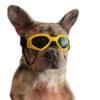 okulary UV dla psa
