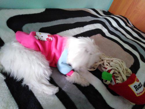 Bluza kreskówkowa dla psa - Hello Kitty photo review