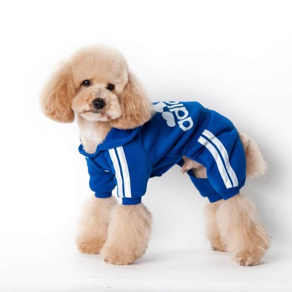 Kombinezon dresowy dla psa chabrowy Adidog na pudlu