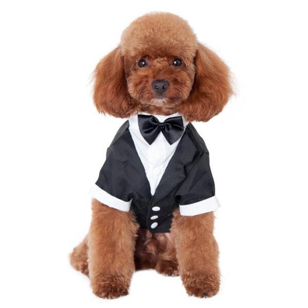 elegancki garnitur z muszką dla małego psa na specjalne okazje