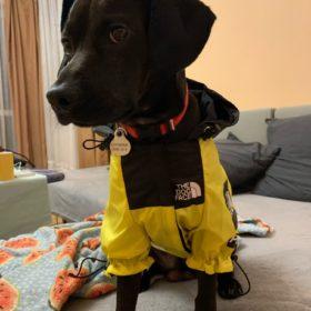 Kurtka dla psa PUPREME X THE DOG FACE YELLOW photo review