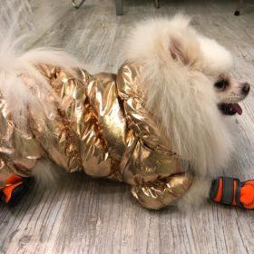 Ocieplany kombinezon dla psa FUNKY photo review