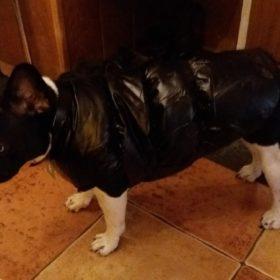 Ocieplana kurtka dla psa FUNKY photo review