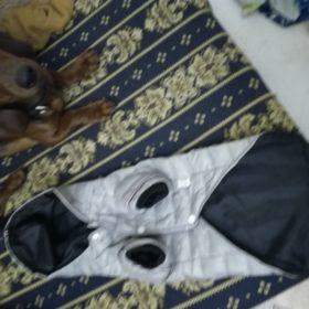 Pikowana kurtka dla psa FASHION photo review