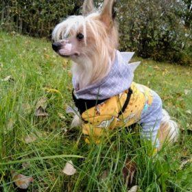 Kombinezon dla psa DINO IN SPACE photo review