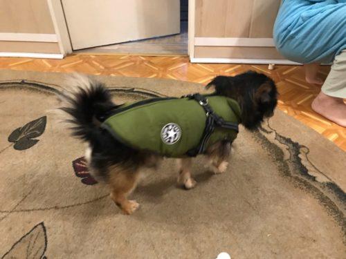 Kurtka dla psa z szelkami FASHION SPORTS photo review