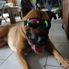 Okulary przeciwsłoneczne BIKER dla psa photo review
