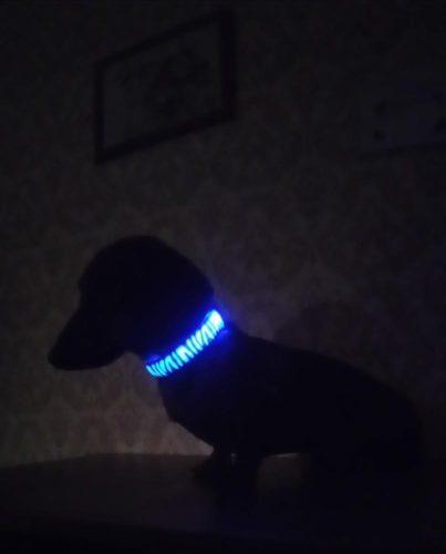 Obroża świecąca LED ZEBRA photo review