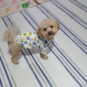 Bluza dresowa dla psa ZWIERZAKI photo review