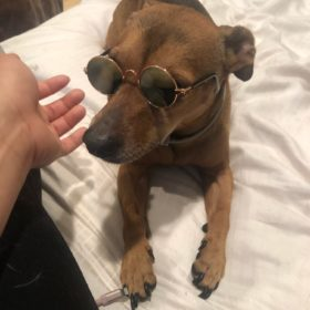 Okulary LENONKI dla psa i kota photo review