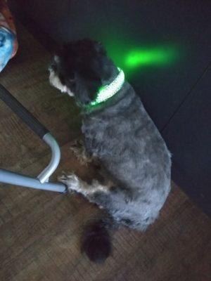 Obroża świecąca LED GEPARD photo review