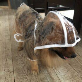 Peleryna płaszczyk przeciwdeszczowy dla psa RAINY photo review
