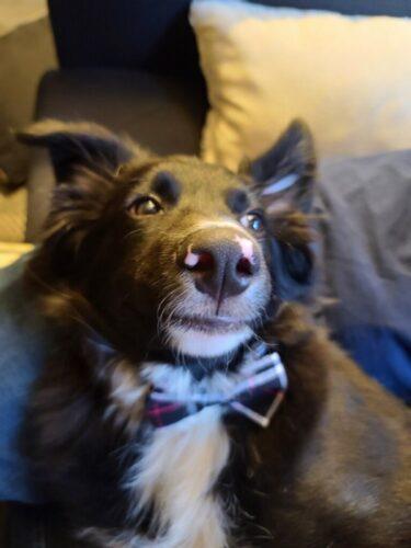 Obroża dla psa z muchą NICO photo review