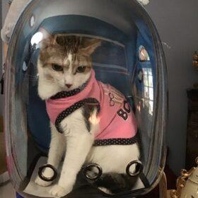 Plecak astronauta transporter FALCON photo review
