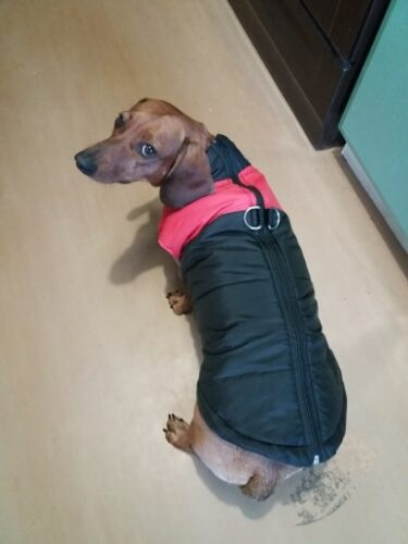 Kurtka dla psa z zapięciem na smycz ZIP UP photo review