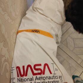 Kurtka przeciwdeszczowa dla psa HOLO NASA photo review