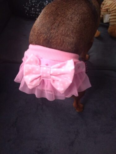 Majtki dla psa z kokardą ROSA photo review