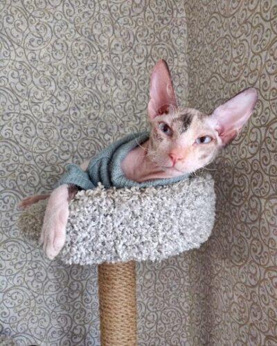Sweter dla psa Gianni photo review
