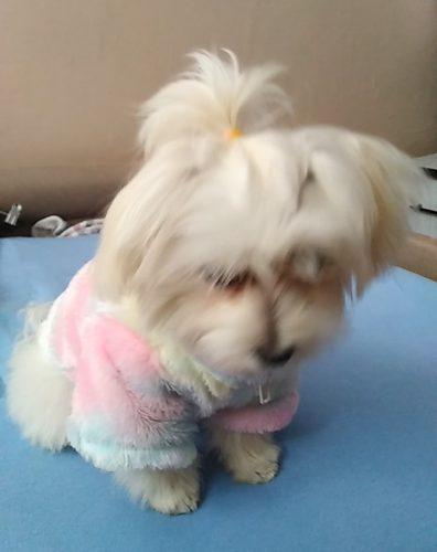 Pluszowa bluza dla psa Furrytale photo review