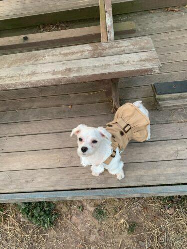 Sukienka z koszulą dla psa EMMA photo review
