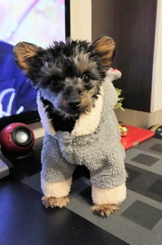 Barankowy kombinezon dla psa BEAR BALLS photo review