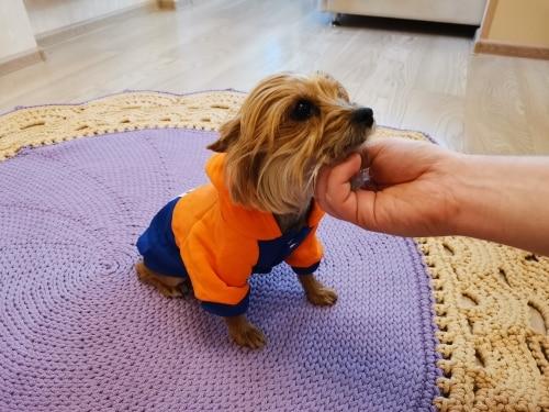 Bluza dla psa ADI SPORT photo review