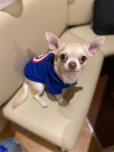 Kreskówkowa bluza dla psa Kapitan photo review