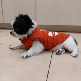 Dwustronna kurtka dla psa ADIPAW photo review
