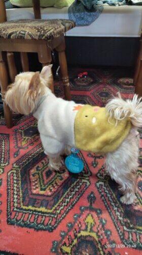 Sweter dla psa FIZZY photo review