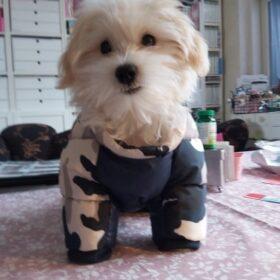 Ocieplany kombinezon dla psa WINTER KILLER photo review