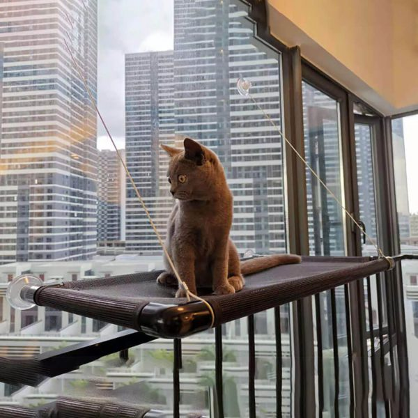 Hamak dla kota Catzar kot na hamaku