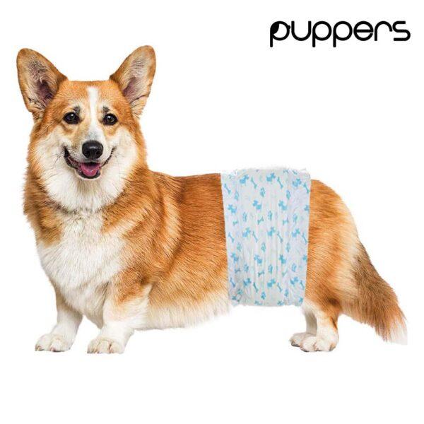 Pieluchy dla psa samca puppers na corgie